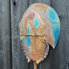 Tidal #6 (Shore Series) by Giselle Simons, Natural Horseshoe Crab Shell and Oil Paint