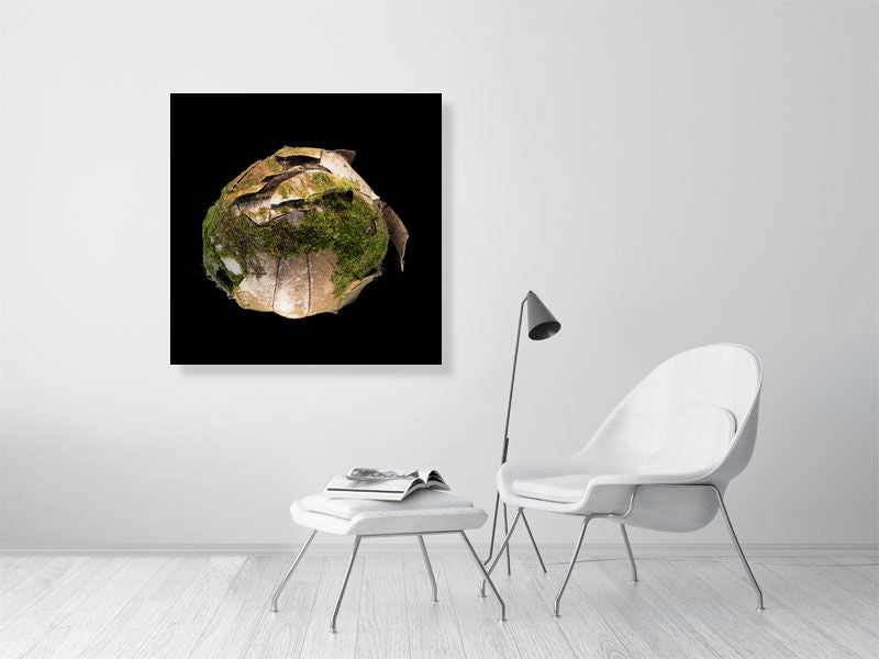 Moss covered football on black background print on living room wall