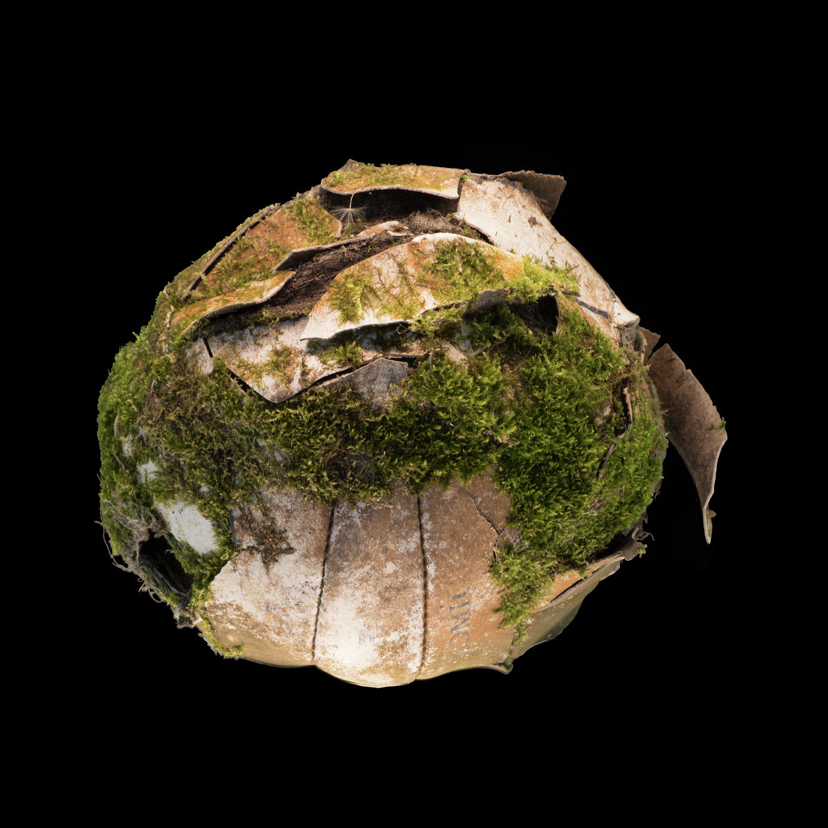 Moss covered football on black background print