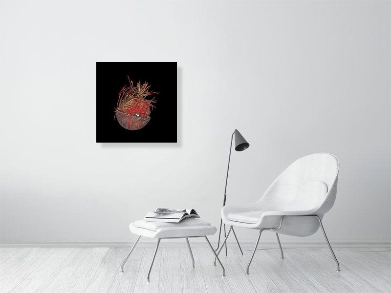 Unravelled cricket ball on black background print on living room wall