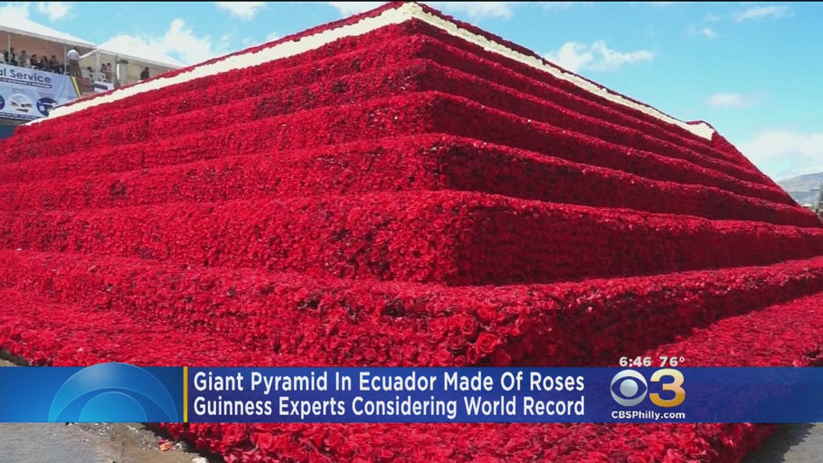 Ecuador Builds Pyramid Of Roses In Attempt To Set A World Record