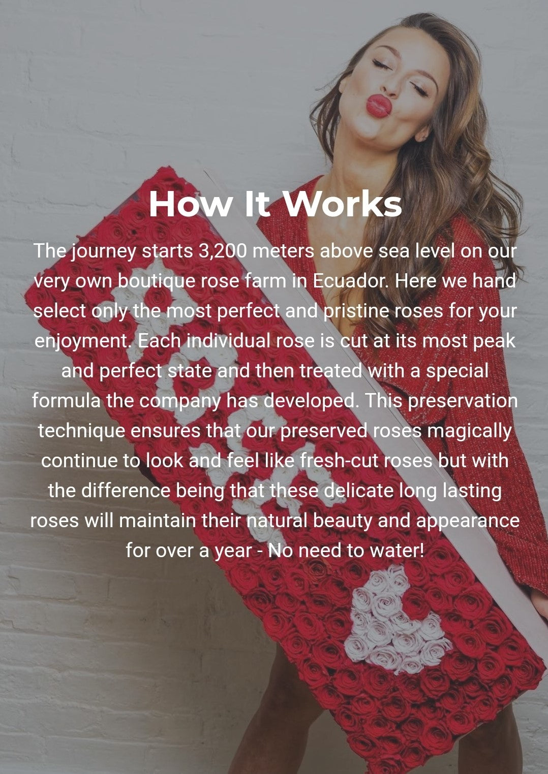 Eternity Roses Explained: How It Works