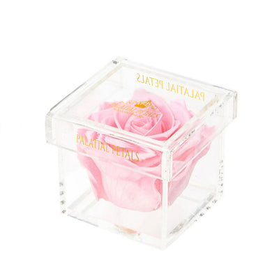 Bridal Pink Eternity Rose - Petit Bisou