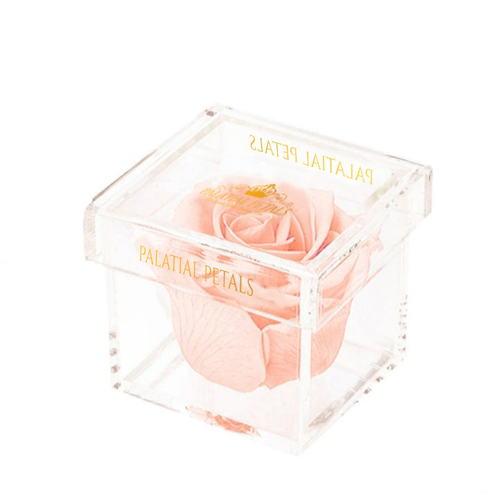 Blush Eternity Rose - Petit Bisou