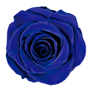 royal blue jumbo preserved rose
