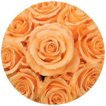 Mimosa Roses That Last A Year - Petite Rose Box - Palatial Petals