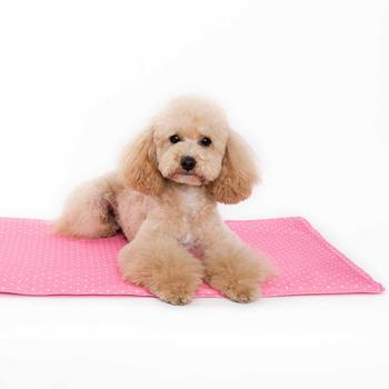 iCool Gel Dog Mat by Dogo - Pink