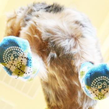 Image of dog wearing Non-Skid Blue and Green Argyle Socks - bottom view.