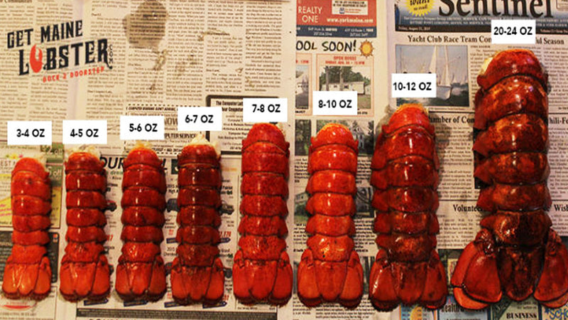 Lobster Chart: Sweetness and Tenderness Relative to Size