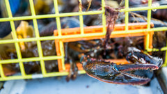Maine Lobster Industry Terms