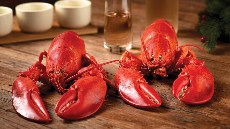 Live Maine Lobsters (1.1 - 1.2 lb)