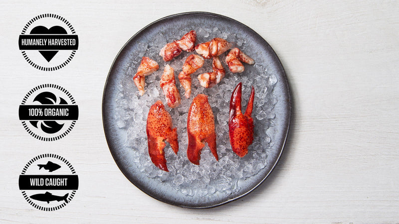 Perfectly Cooked Lobster Meat