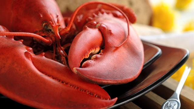 Live Maine Lobsters (1.9 – 2.2 lbs)