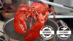 Live Maine Lobsters (1.4 – 1.6 lbs)