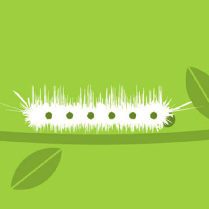 Caterpillar Greeting Card