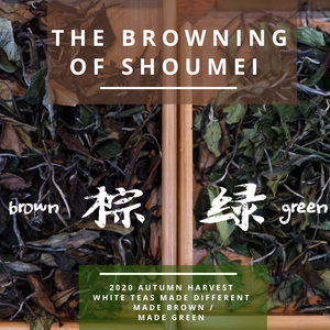 Brown Shoumei versus Green Shoumei Fuding White Tea
