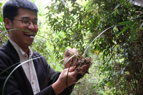 Master Zhang found a rare wild orchid, and is eager to take it home to grow on his tea table,