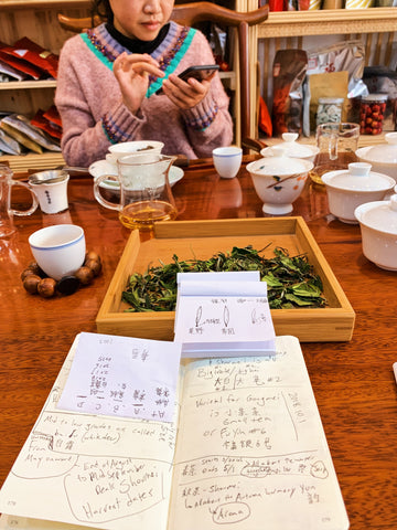 Frantically taking notes on Fuding White Tea