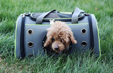 Outdoor Dog&Cat Hand-Carrying Bag