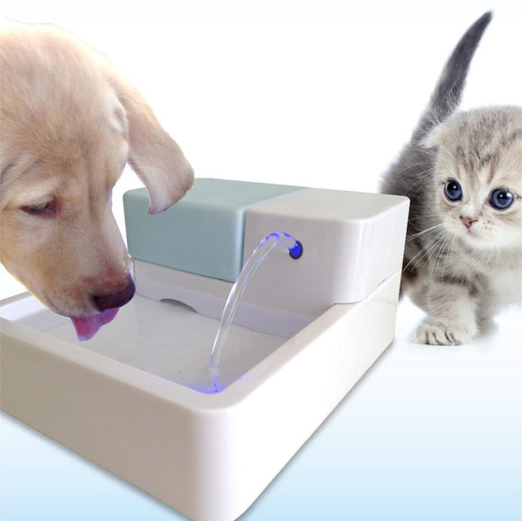 smart dog fountain with LED light