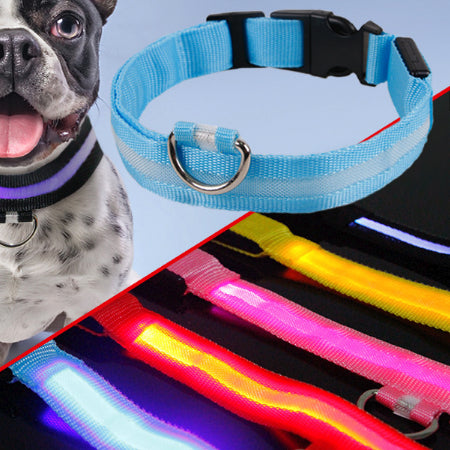 USB Rechargeable LED Night Safety Dog Collar