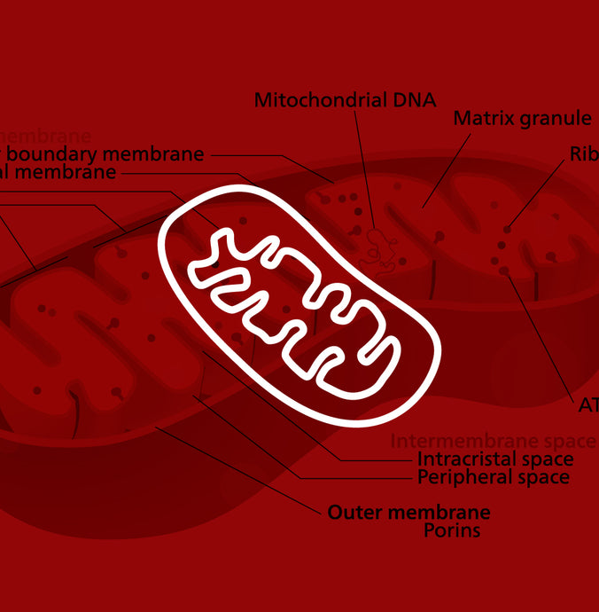 Can Red Light Therapy Stimulate Your Mitochondria to Produce Cellular Energy?
