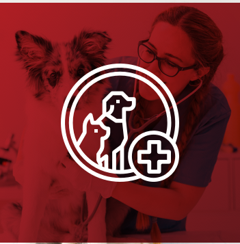 Red Light Therapy for Animals - Benefits & Veterinary Usage
