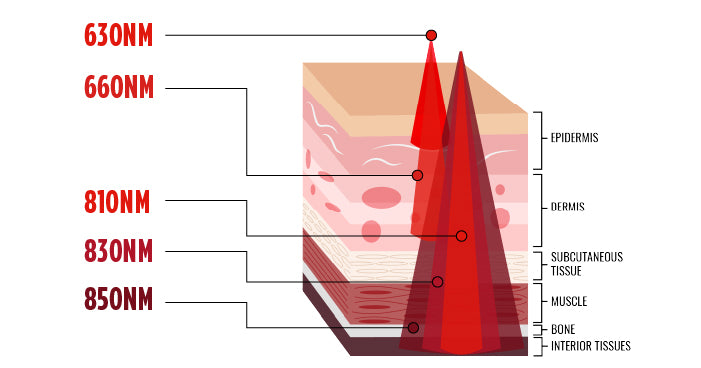 red light therapy skin diagram