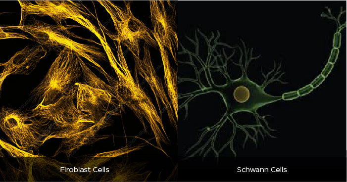 Types of nerve cells