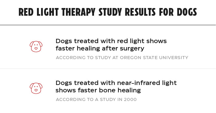 list of red light therapy studies related to dogs