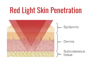 Red Light Skin Penetration