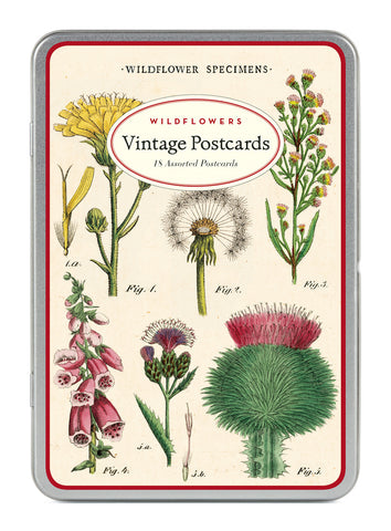 Wildflower Vintage Postcards by Cavallini & Co.