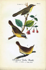 Maryland Yellow Warbler - 1888 Lithograph - Three Labs Salvage