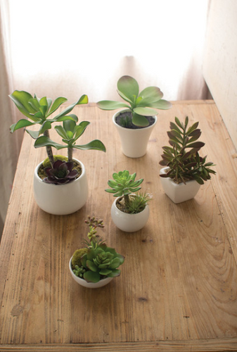 Artificial Succulents With White Ceramic Pots