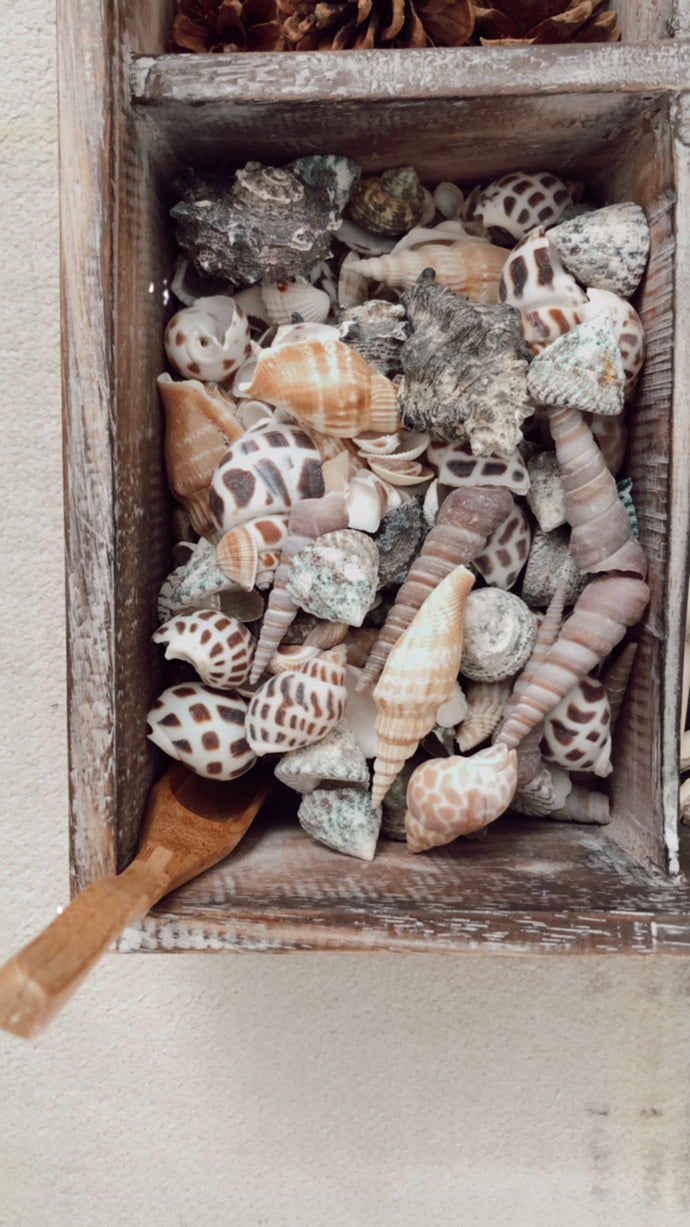 sea shells (20 pieces)