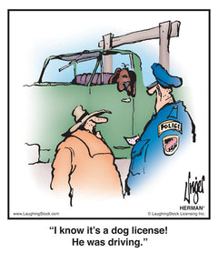 I know it's a dog license! He was driving.