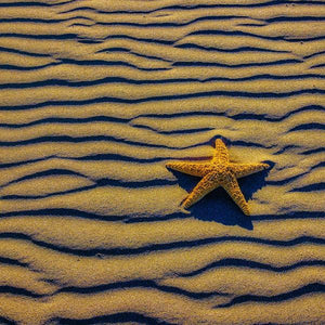 Starfish of Wavy Sandy Beach by Gary Gay, Archival Photography Print