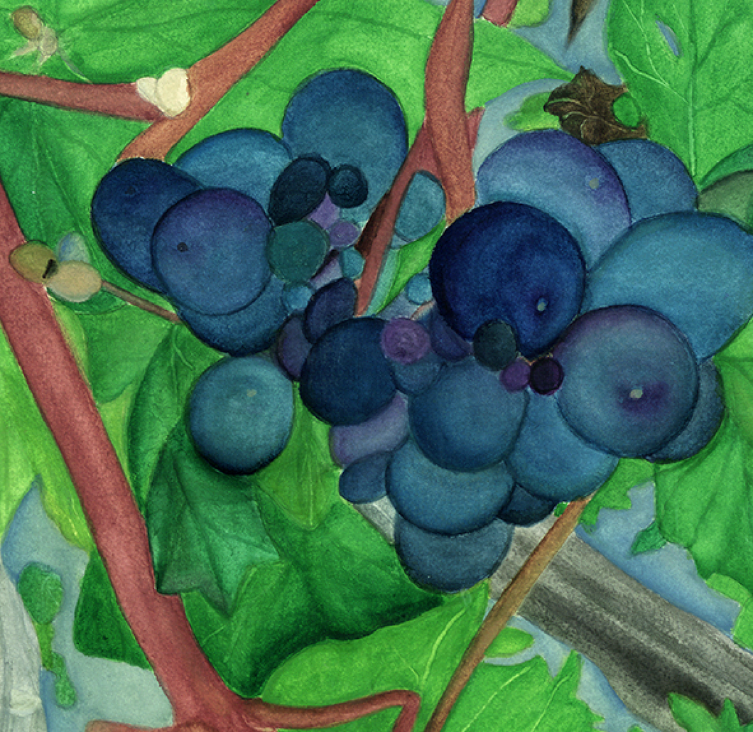 """Harvest Time"" By Sylvia Herrera, On Arches Watercolor Paper"