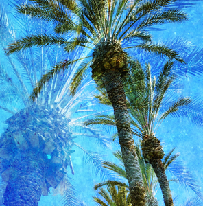 """Dreaming of Palm Trees"" By Anne Warfield, on Giclee Smooth Fine Art Paper"