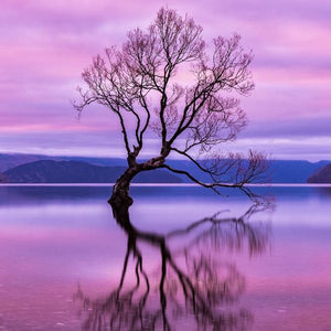 """The Wanaka Tree"" By Armand Nour, On Archival Paper"