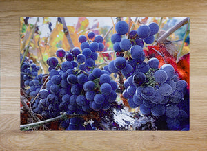 """Cabernet Harvest""  By Chris Purdy, Photograph"