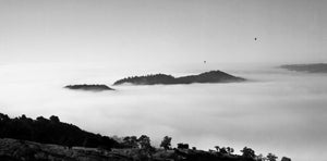 """""Foggy Morning Napa Valley"""" By Chris Purdy,  Photograph on un-stretched Canvas"