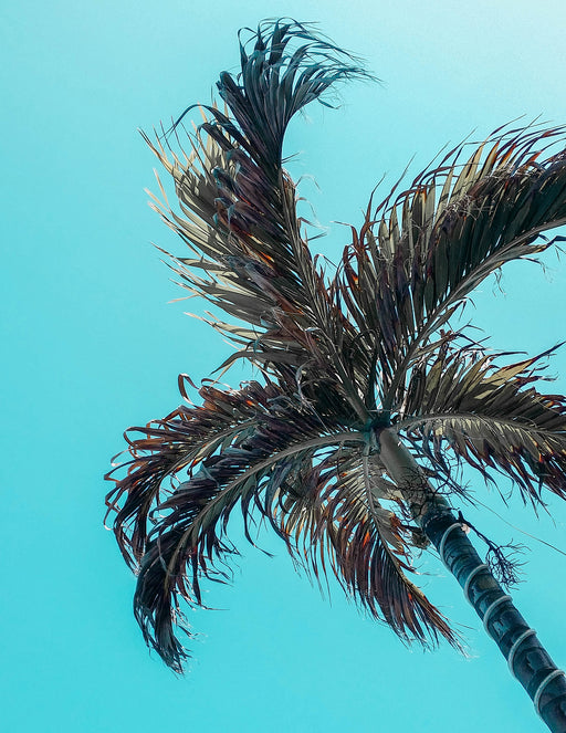 blue skies and palm tree photo