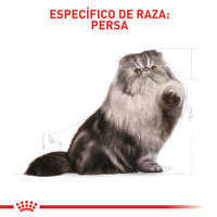 ROYAL CANIN GATOS PERSIAN