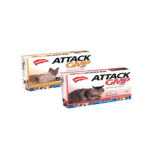 Attack gatos