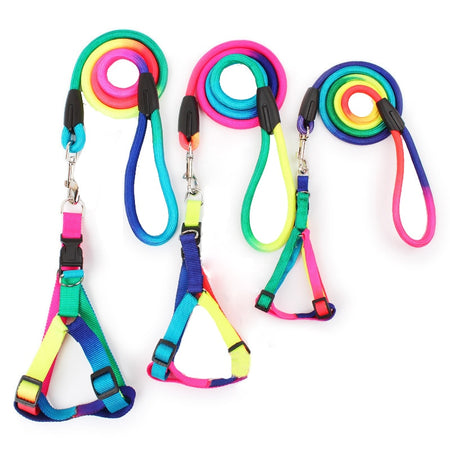 Need to walk your dog more? Try Spectra | Dog Harness & Leash Set