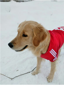 The Adidog Hoodie Sweatshirt - Big Dogs