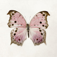 Color Me Butterfly - Pink