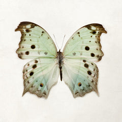 Color Me Butterfly - Mint
