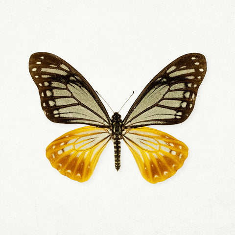 The Butterfly Effect #1